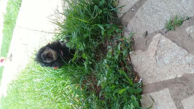 Hospedagem/ Dog Walker/ Pet Sitter Para Cachorros - Foto 5