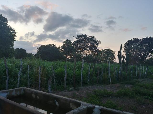 Granja com 8,8 há, duas casas, 2 poços, muito pasto, perto da reta tabajara - Foto 2