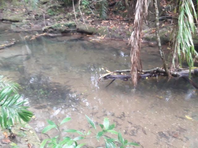 Linda chácara rica em água em Bodoquena - Foto 7