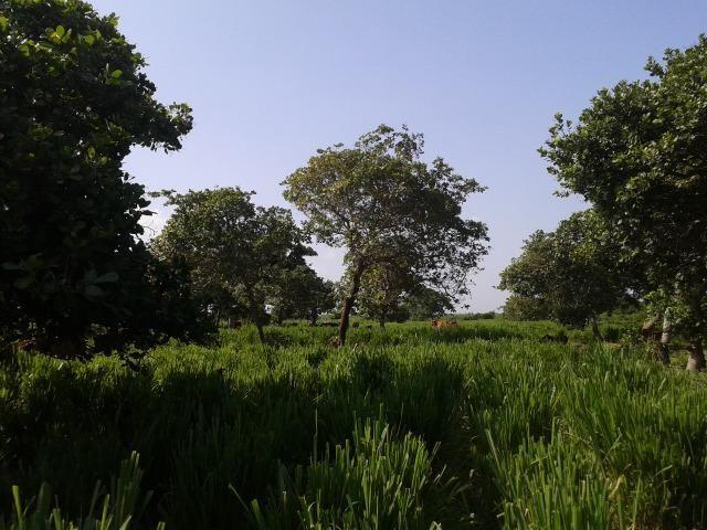 Granja com 8,8 há, duas casas, 2 poços, muito pasto, perto da reta tabajara - Foto 16