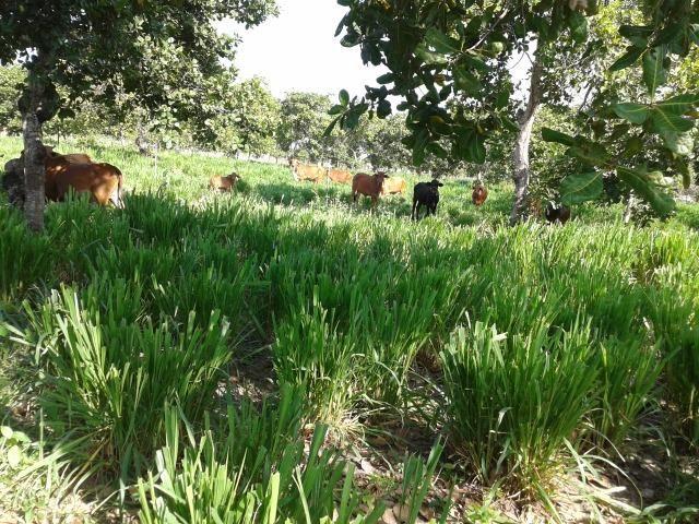 Granja com 8,8 há, duas casas, 2 poços, muito pasto, perto da reta tabajara - Foto 19