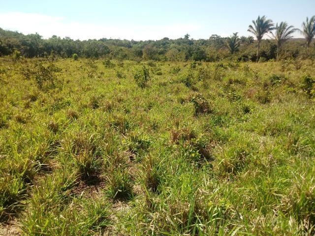 Chácara de 39 hectares em Acorizal ! - Foto 7