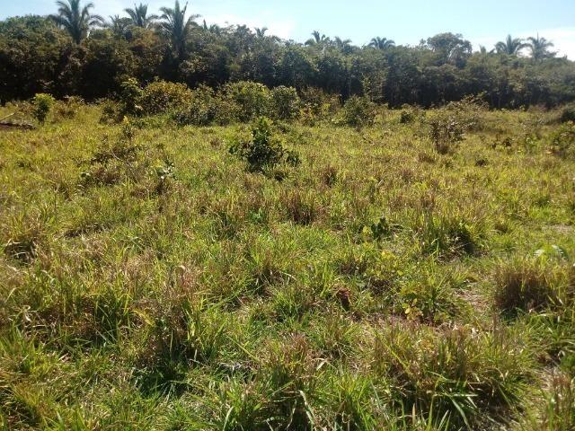Chácara de 39 hectares em Acorizal ! - Foto 9
