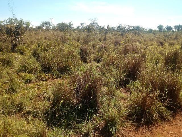 Chácara de 39 hectares em Acorizal ! - Foto 2