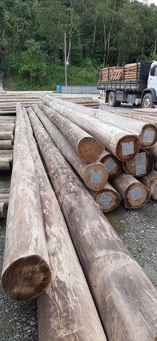 Madeiras Tratadas Pinus ou Eucalipto