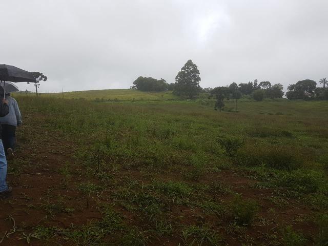 193B/Ótima fazenda de 70 ha bem localizada com ótima altitude e topografia - Foto 2