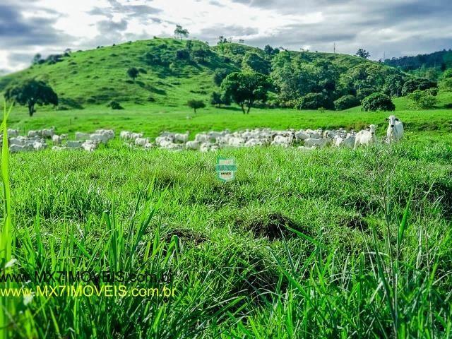 Itaju do Colônia. Linda Fazenda pecuária de 375 Hectares - Foto 7