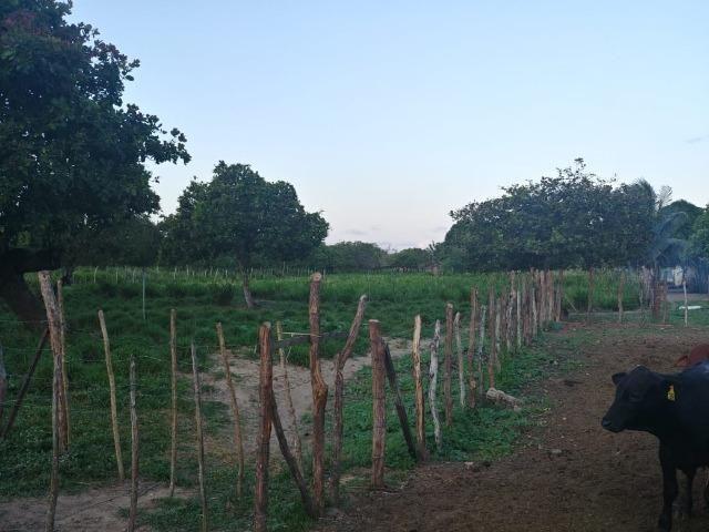 Granja com 8,8 há, duas casas, 2 poços, muito pasto, perto da reta tabajara - Foto 4