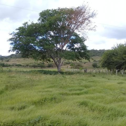 Vendo propriedade na cidade de Igreja Nova Alagoas  - Foto 4