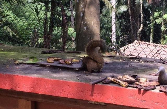 Chácara à venda em Condomínio iolanda, Taboão da serra cod:60343 - Foto 10