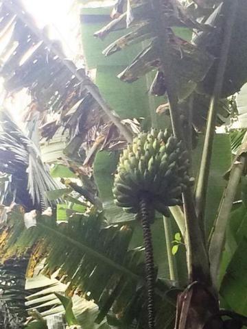 Chácara à venda em Condomínio iolanda, Taboão da serra cod:60343 - Foto 13
