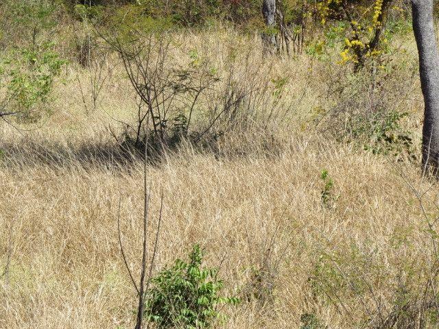 Fazenda com área de 63 há, as margens do Rio das velhas em Corinto - Foto 20