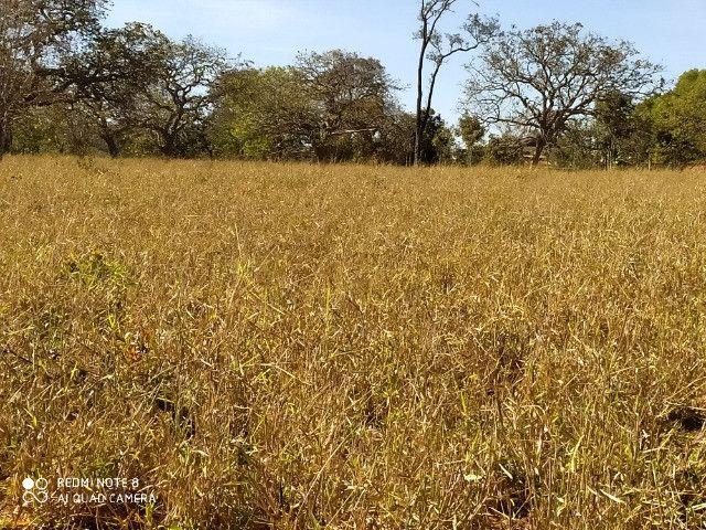 Fazenda 39 hectares - Foto 2