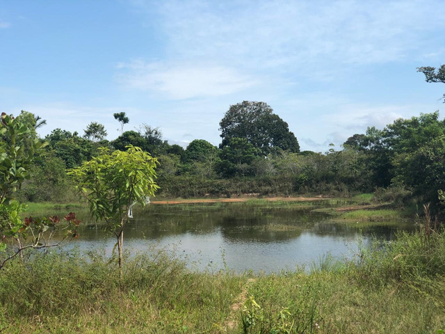 Vendendo terreno de 5 hectares em Parintins - Foto 3
