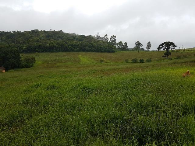 193B/Ótima fazenda de 70 ha bem localizada com ótima altitude e topografia - Foto 11