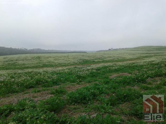 Fazenda Produtiva, Topografia Mecanizada, Propriedade Lindíssima - Foto 9
