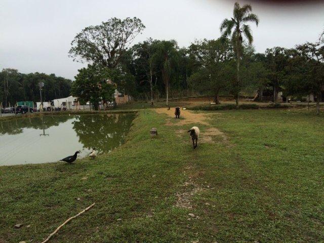 Chácara para alugar em Vila nova, Joinville cod:L58656 - Foto 13