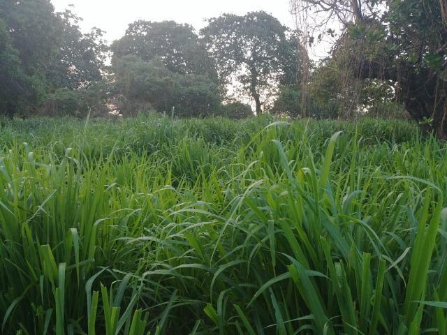 Granja com 8,8 há, duas casas, 2 poços, muito pasto, perto da reta tabajara - Foto 7