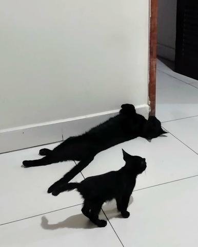 Doa-se lindo gatinho macho pretinho - Foto 3