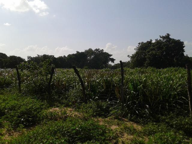 Granja com 8,8 há, duas casas, 2 poços, muito pasto, perto da reta tabajara - Foto 17