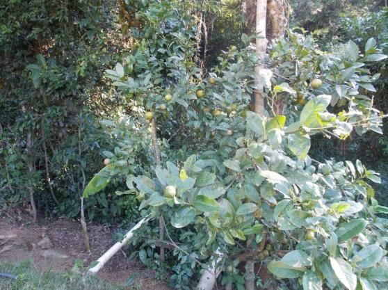 Terreno à venda em Jardim guaçu, São roque cod:59919 - Foto 14