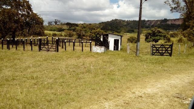 Fazenda 94,5 Ha. Pilar - Foto 4