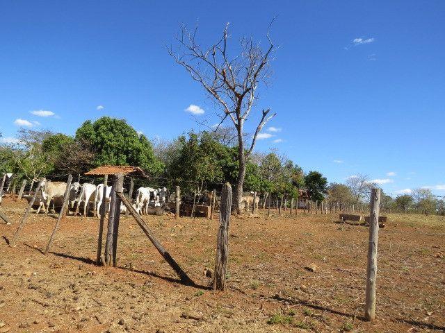 Fazenda em Corinto com área de 100 há, sede boa, curral, 70% formada - Foto 8