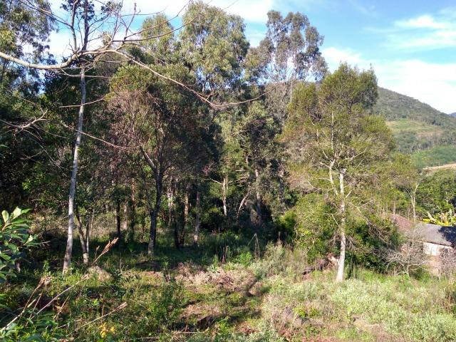 Chácara em Morro Reuter com 2 casas, pomar, mata, araucárias - Foto 3