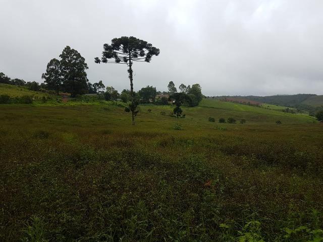 193B/Ótima fazenda de 70 ha bem localizada com ótima altitude e topografia - Foto 7