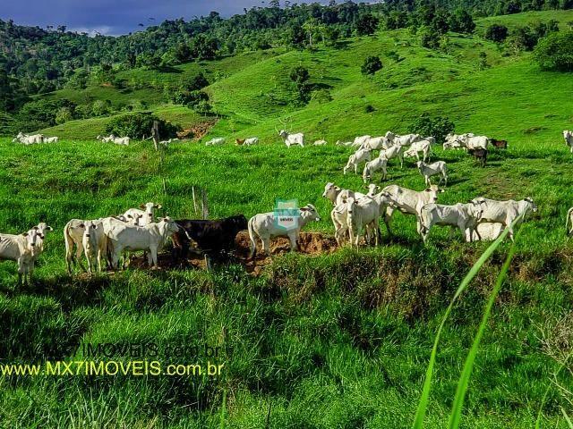 Itaju do Colônia. Linda Fazenda pecuária de 375 Hectares