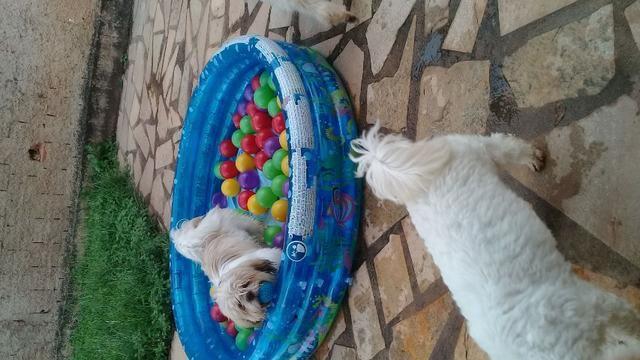 Hospedagem/ Dog Walker/ Pet Sitter Para Cachorros - Foto 3