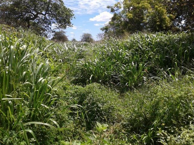 Granja com 8,8 há, duas casas, 2 poços, muito pasto, perto da reta tabajara - Foto 14