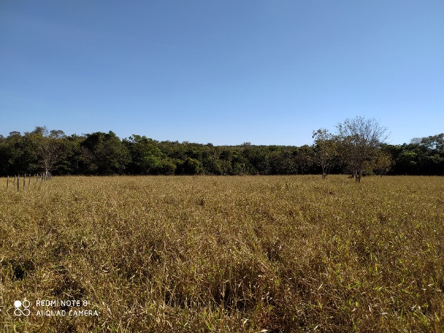 Fazenda 39 hectares - Foto 3
