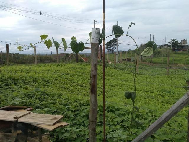 Vende-se terreno São Luís da Barra Volta Redonda-RJ - Foto 2