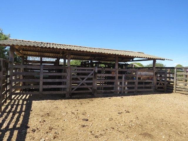 Fazenda em Augusto de Lima com área de 350 há, toda formada - Foto 15