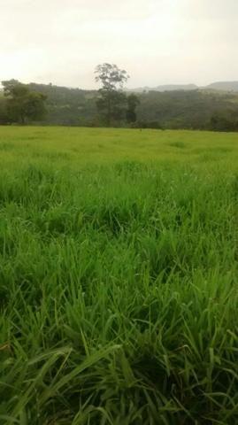 Fazenda 503 hectares Alto Araguaia-MT
