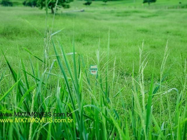 Itaju do Colônia. Linda Fazenda pecuária de 375 Hectares - Foto 18