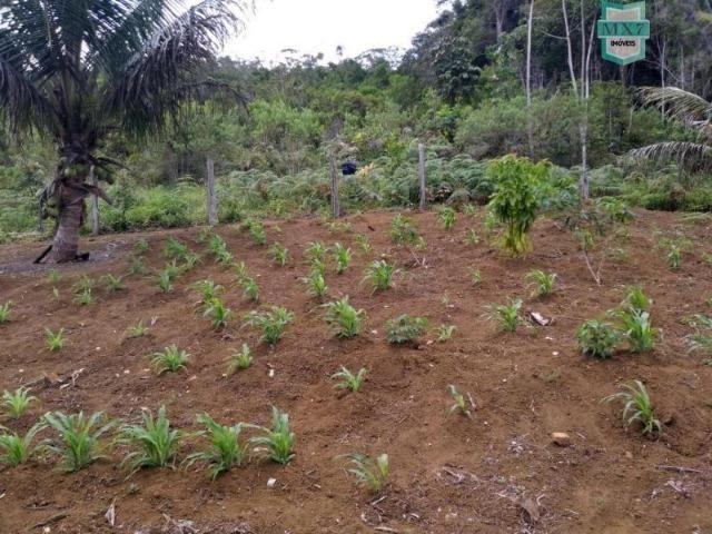 Maraú. Fazenda de 710 Hectares com diversas atividades de produção e rica em água - Foto 5