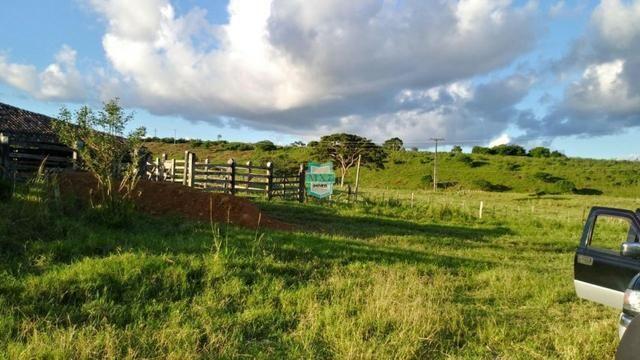 Itagibá. Fazenda pecuária de 375 Hectares com toda infraestrutura. - Foto 5