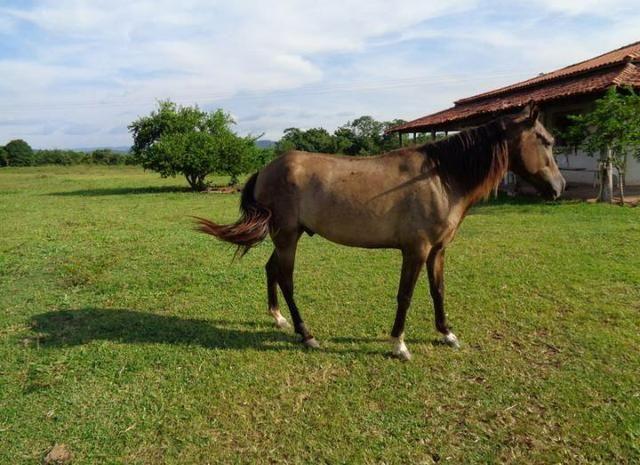 Ótima Fazenda a 50km de Cuiabá com 660ha - Foto 3