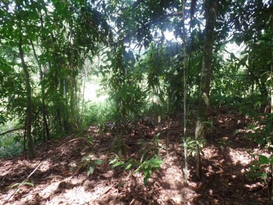 Chácara à venda em Bom jesus do bagre, Belo oriente cod:356 - Foto 15