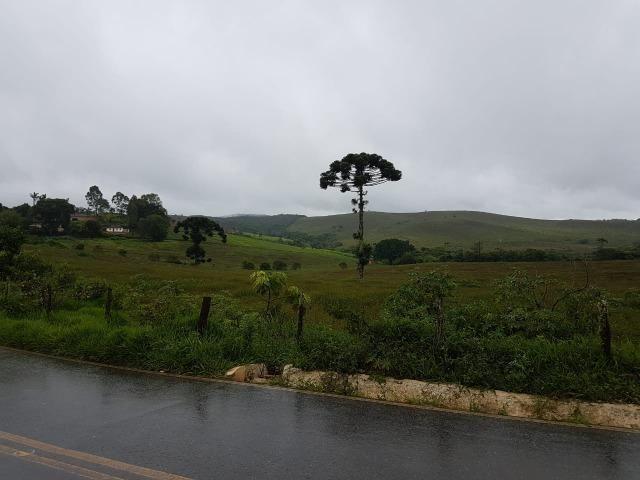 193B/Ótima fazenda de 70 ha bem localizada com ótima altitude e topografia - Foto 8