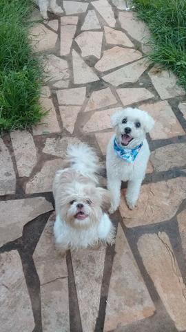 Hospedagem/ Dog Walker/ Pet Sitter Para Cachorros - Foto 4