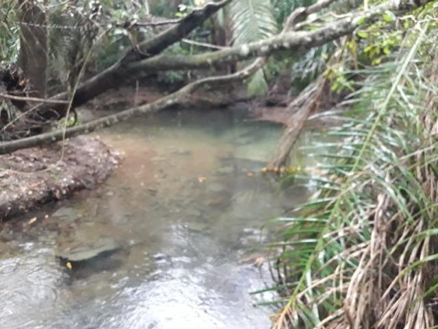 Linda chácara rica em água em Bodoquena - Foto 2