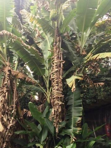 Chácara à venda em Condomínio iolanda, Taboão da serra cod:60343 - Foto 12