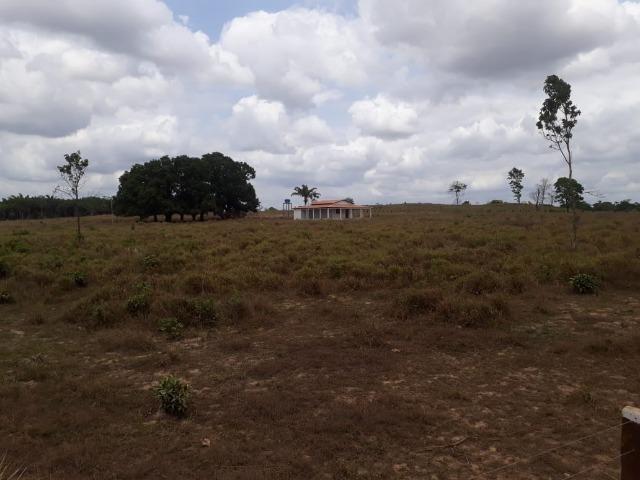 Vendo fazenda com 315 Hectares de terra!! - Foto 12