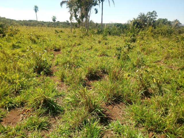 Chácara de 39 hectares em Acorizal ! - Foto 14