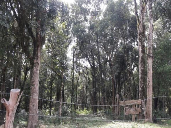 Chácara à venda em Areia branca dos nogueira, Mandirituba cod:CH00013 - Foto 3
