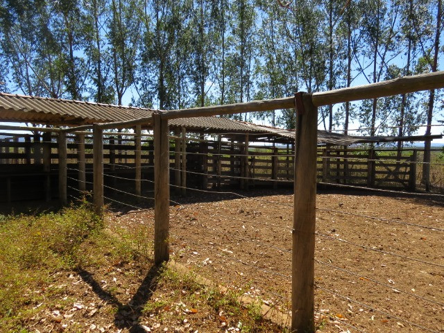 Fazenda com área de 600 há, localizada à 20 km/Corinto - Foto 2