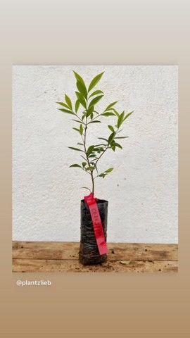 Plantas e Mudas